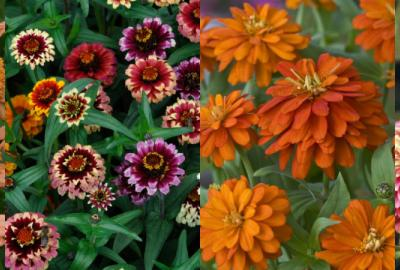 Header zinnia awards 2017